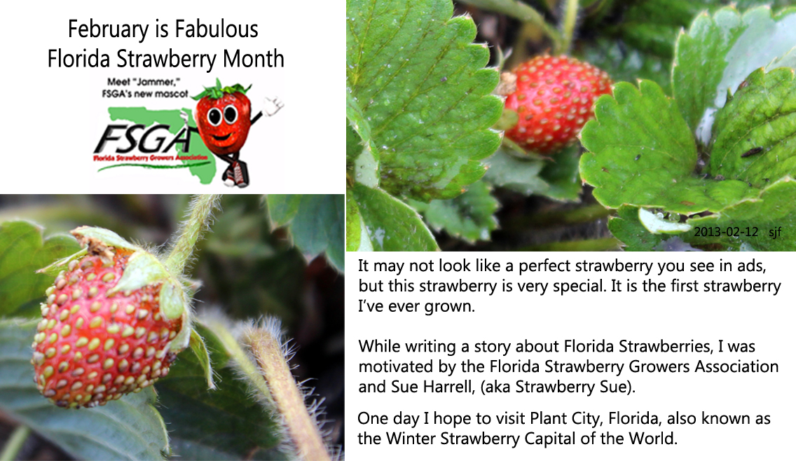 to highlight this beautiful and delicious fruit the florida strawberry growers association has created a series of educational resources starring jammer