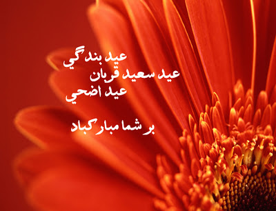 Eid ul adha akhtar pashto nice ghazal poetry eid ul adha farsi persian dari latest eid ul adha best wishes with attractive graphic design m4hsunfo