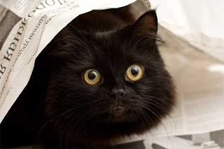 TheJungleStore.com Blog | Black Cats - Unlucky Or Misjudged?