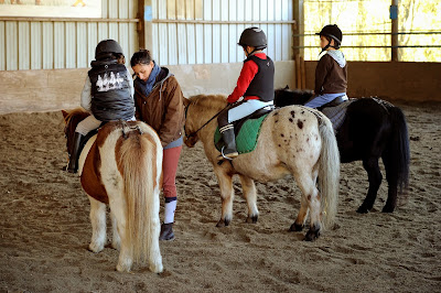 Animal, Horse, Children, Ride, Orgeres, France, Pony, Value-Added Tax, Economy, French Equestrian, Small Horse, Plummets