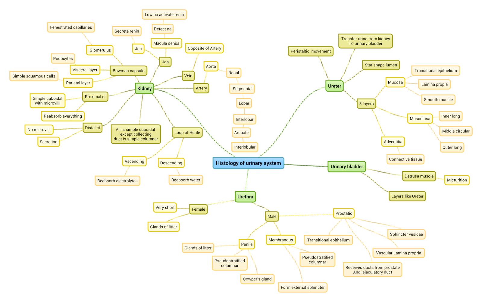 nervous system concept map html nervous usa states map collections. Black Bedroom Furniture Sets. Home Design Ideas