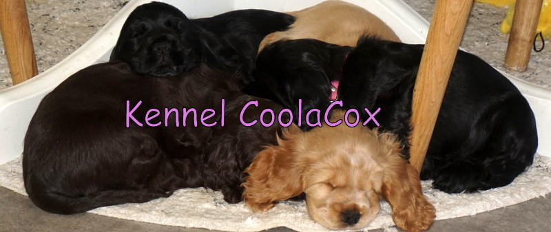 Kennel Coolacox