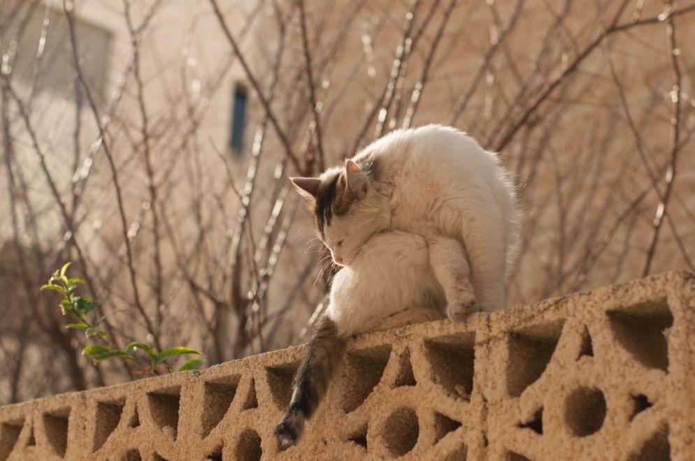 11. Yoga Cat by Rasha Dajani