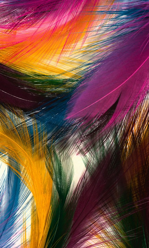colorful feathers mobile phone wallpaper 480 800 hd