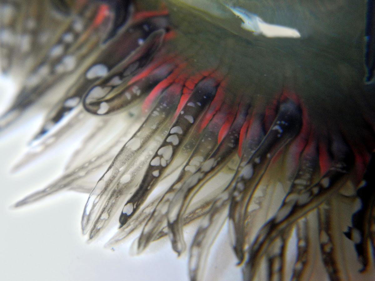 http://1.bp.blogspot.com/-L9GAdCFC4j4/UC0e1LnxWfI/AAAAAAAAcMA/ARFS9SZq2yM/s1600/critter+tentacles.jpg