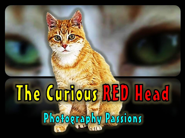 http://www.photographypassions.xyz/2015/12/cat-antics-video-cute-ginger-tabby.html