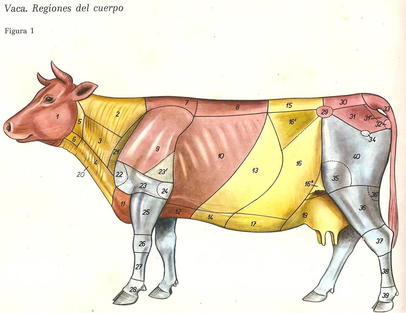 Bovinos de Carne: Razas,Anatomía Topográfica,Nomenclatura y Sistemas ...
