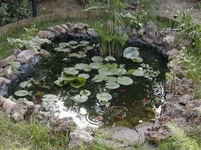 Laghetto la costruzione di un giardino acquatico agosto 2014 for Costruire laghetto in giardino