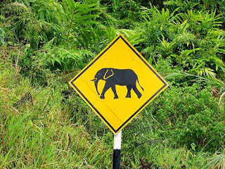 malaysian roads are very dangerous The body of an elephant calf lies on the side of a remote highway in the  in peninsular malaysia so do the dangers to the country's wildlife.