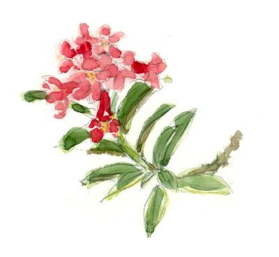 Rododentron ferrufigineum