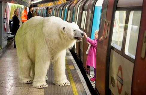 دب قطبي عملاق يثير الفزع في شوارع لندن