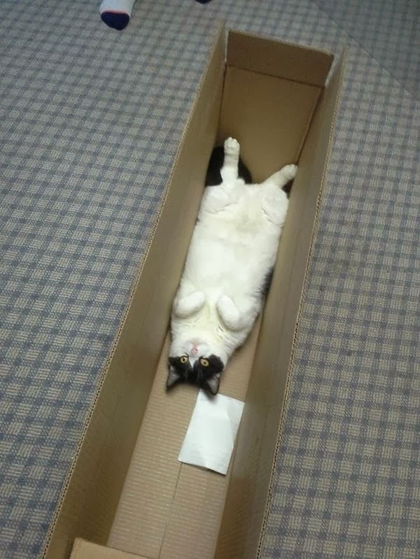 Funny cats - part 87 (40 pics + 10 gifs), cat lays down in the box