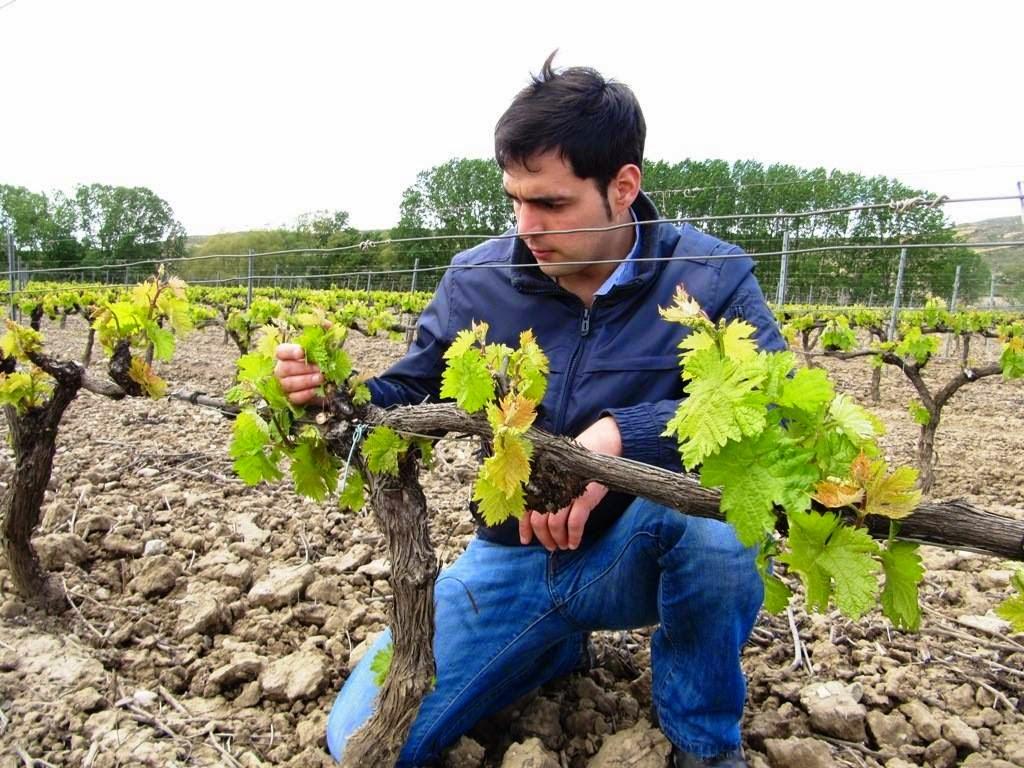 Urbina Vinos Blog: ¿Elaborar un Curriculum Vitae para la Industria o ...