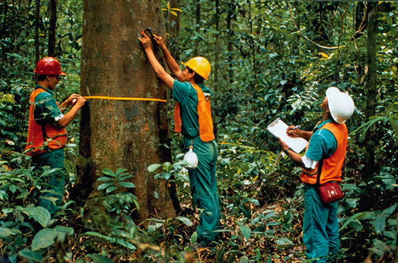 Tata Hutan