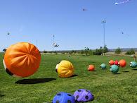 Flying Kites in Chico, CA