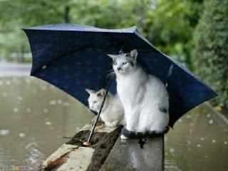 Penyakit Saat Musim Hujan
