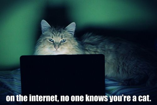 On The Internet - No One Knows You're A Cat