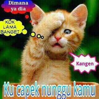 Kucing bisa bicara, Kucing Galau, Kucing Mengamok Karena Stres