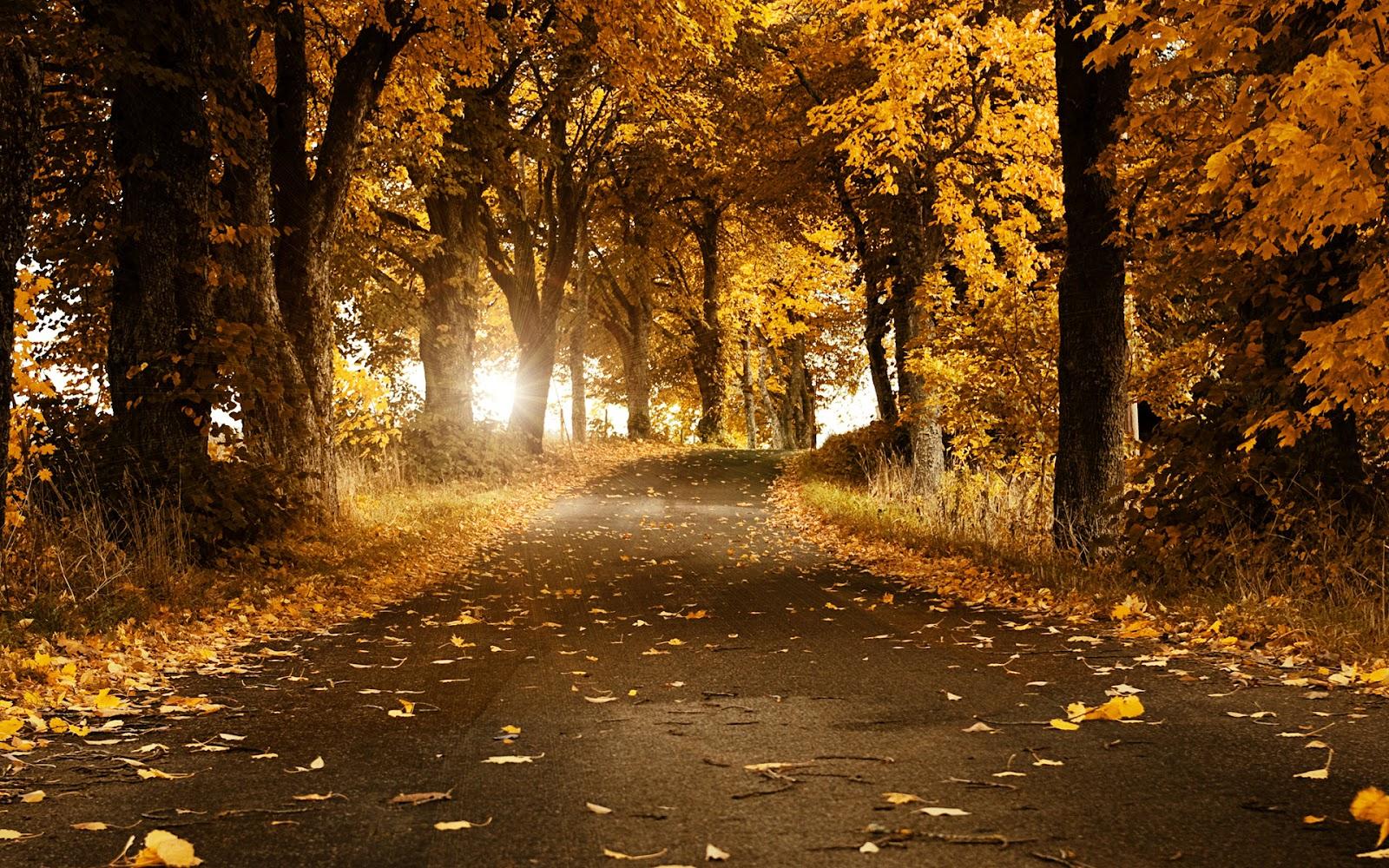 http://1.bp.blogspot.com/-LBYtS9q2OtM/T039dB4QQtI/AAAAAAAAAFQ/Qzj3J79mCQA/s1600/autumn_breeze-wide.jpg