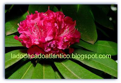 Detalhe de flor dos jardins do Grande Hotel Escola Senac de Campos do Jordão