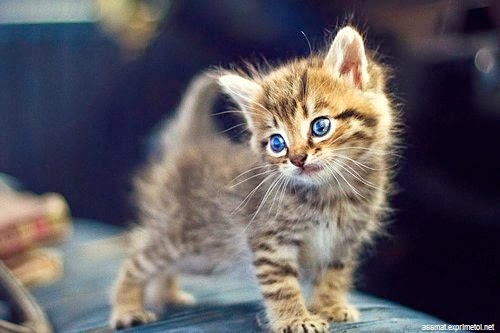 Petit chaton tout mignon photo de chat - Photo de chaton trop mignon ...
