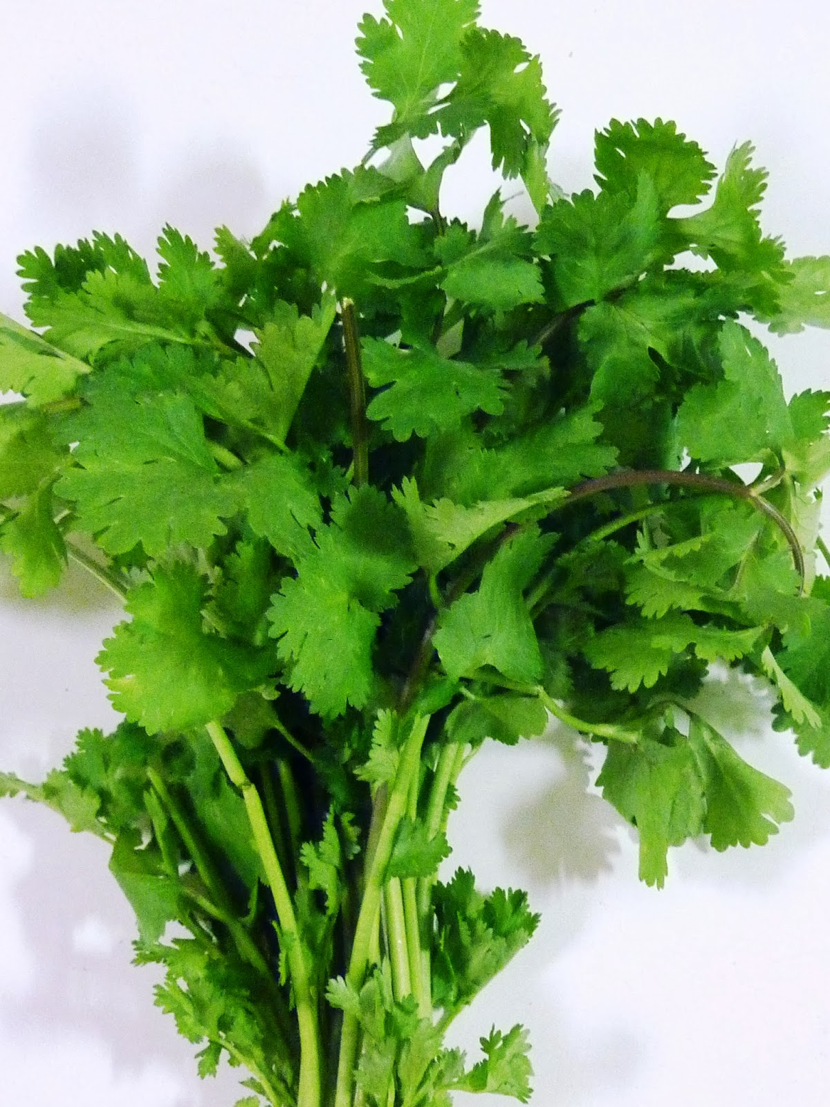 i coriander Chances are pretty good that if you have ever grown cilantro you ended up with coriander seeds at some point coriander is the fruit or seed from the cilantro plant.