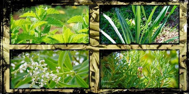 Como secar as plantas aromáticas e medicinais