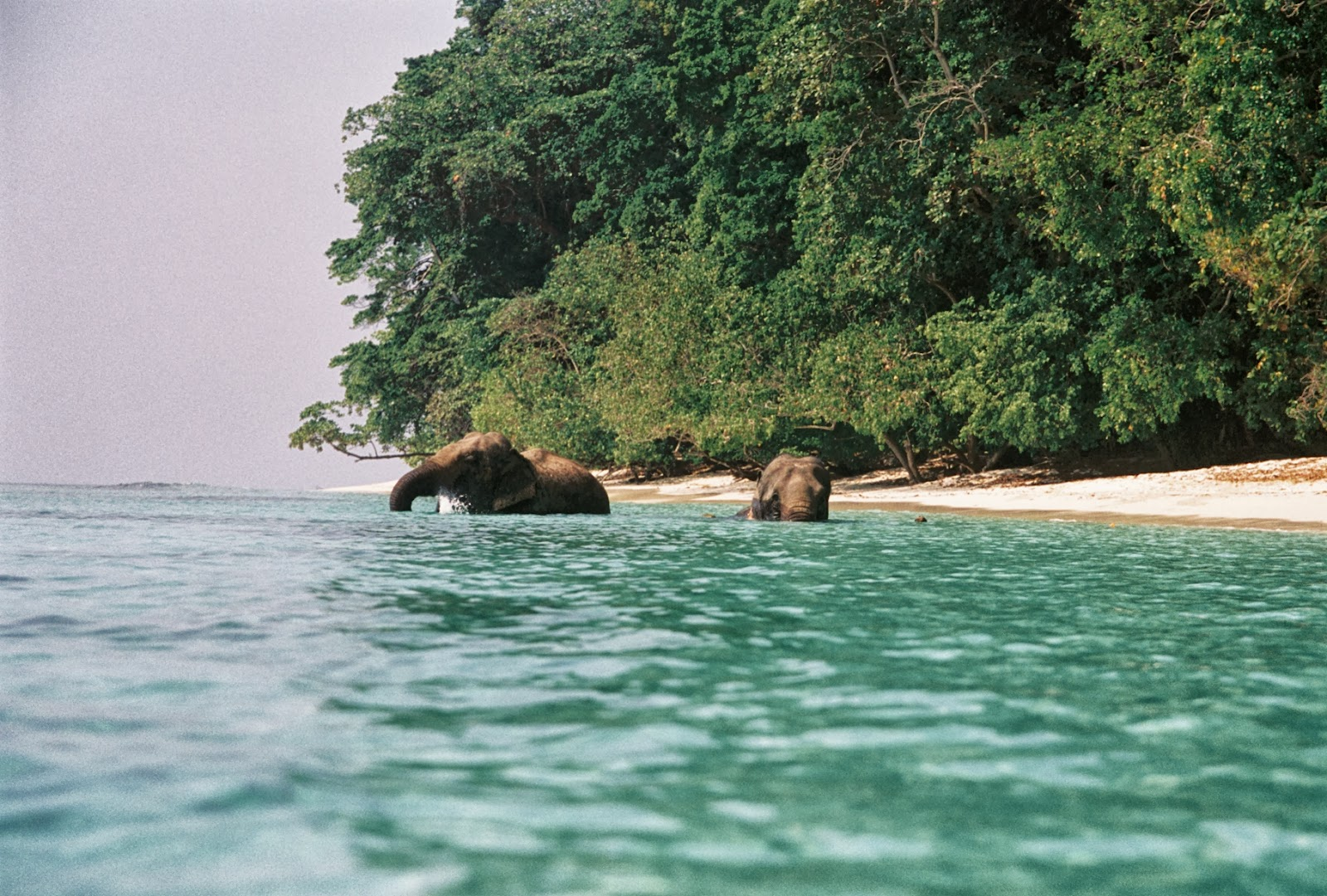Andaman and Nicobar Islan India  city photos gallery : andaman and nicobar island a relaxed tropical island andaman and