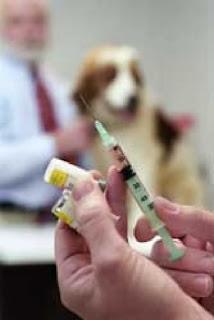 como-detectar-la-diabetes-en-mi-mascota-signos-sintomas-consejos-veterinaria