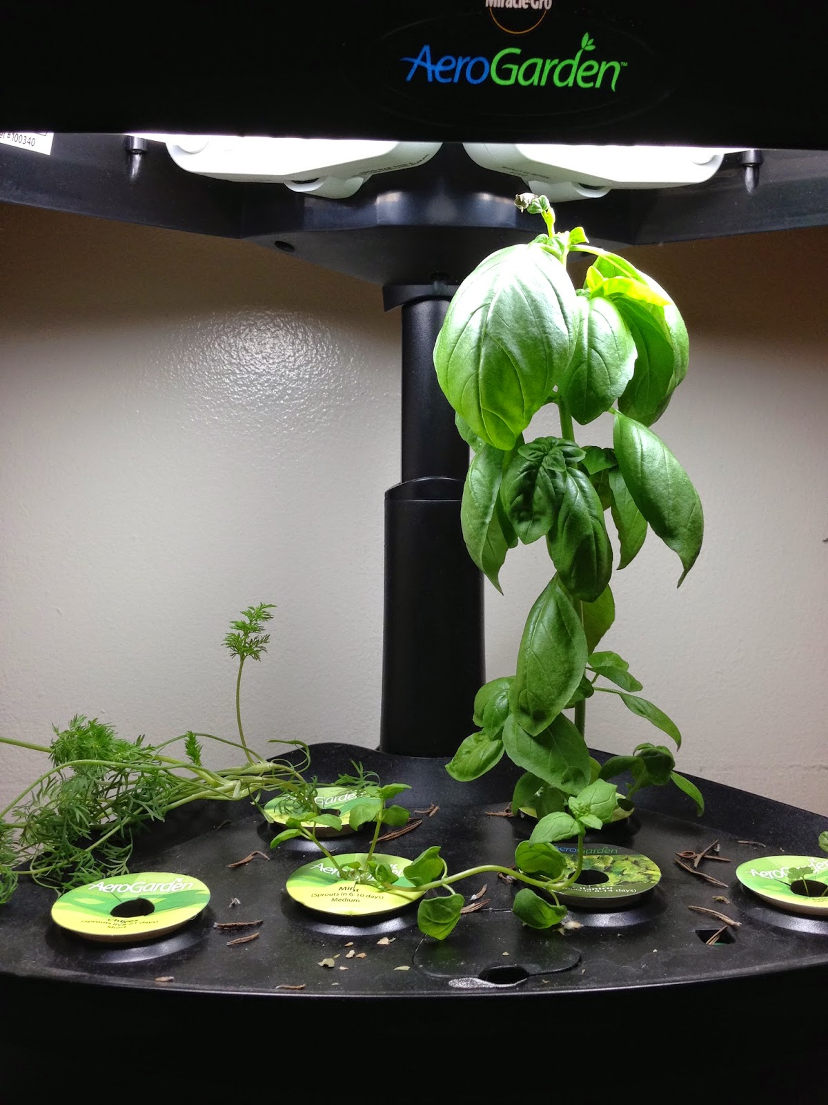 An AeroGarden indoor herb garden makes a great holiday gift!
