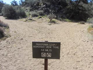 Panorama Loop Trail junction, lower, Black Rock Canyon, Joshua Tree National Park