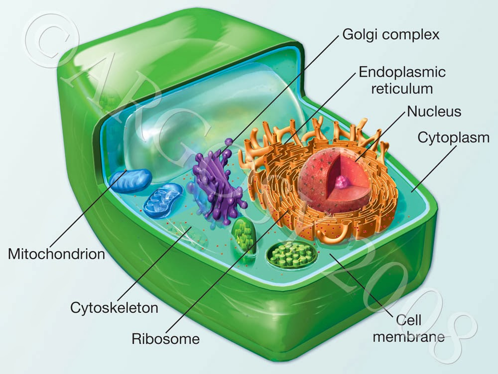 Grade 10 Applied Science: Feb. 7 - Cell Structure
