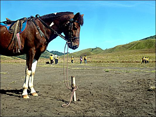 Jurnal Paket Wisata Bromo - Kuda di Savana