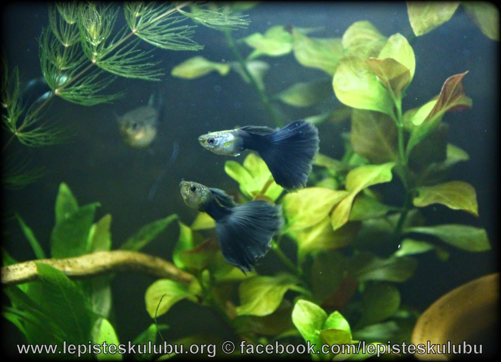 http://1.bp.blogspot.com/-LDoFRyWwamE/VVJg2LplcbI/AAAAAAAAFkM/CH401S83_dA/s1600/IMG_4794.JPG
