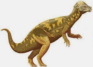 Pachicephalosaurus