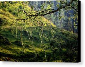 Tirol - Austria / Canvas Print