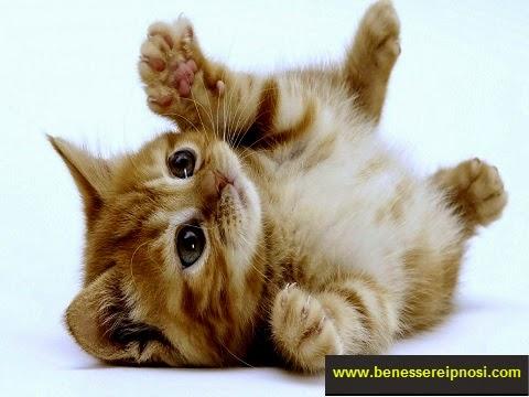 Sognare gatti significato sognare gatti neri significato for I gattini piccoli