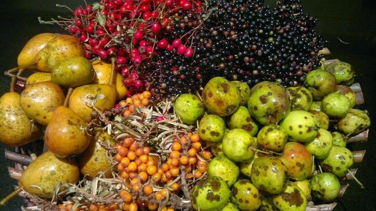 turšija šumsko voće divlje voće borpba protiv gripe prirodnim putem
