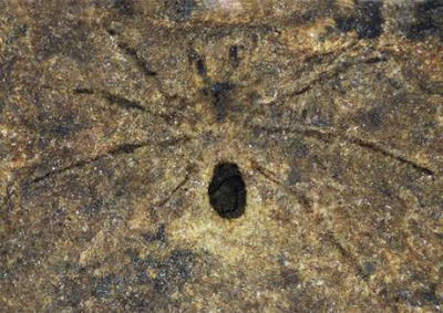 215 million year old spider fossil found in Italy