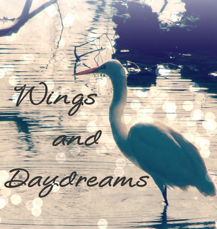 Rachelle's Birding Blog