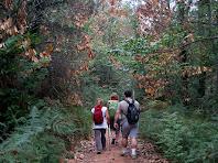 El sender avança per un bosc exuberant i humit