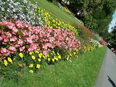 flowers hungary heviz