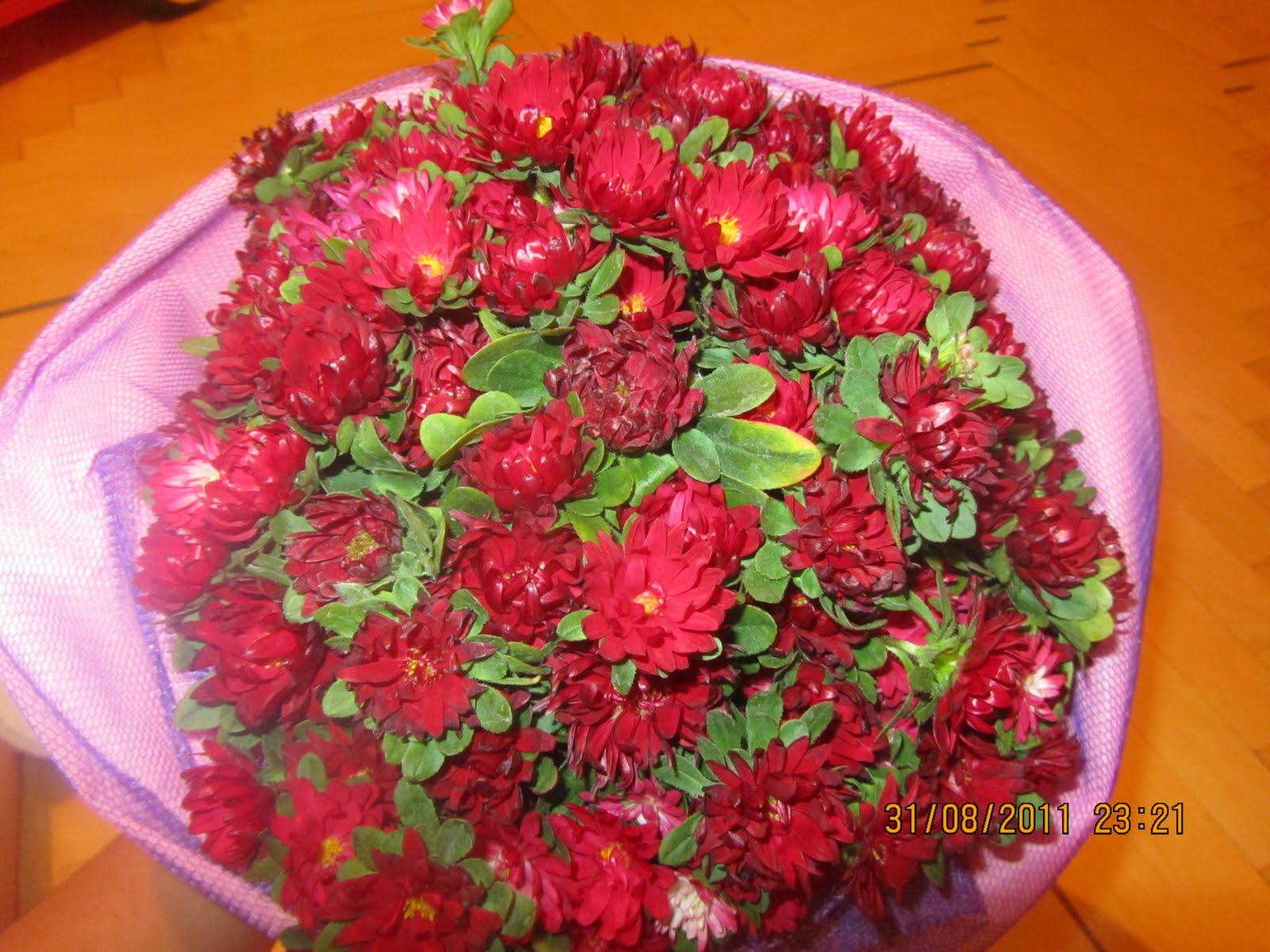 цветы малинового цвета названия и фото