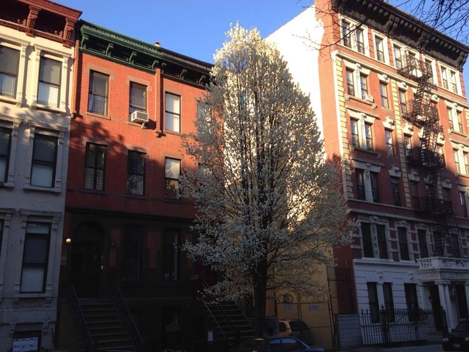 Central Harlem Blooms