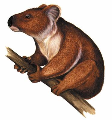 koala prehistorico Nimiokoala