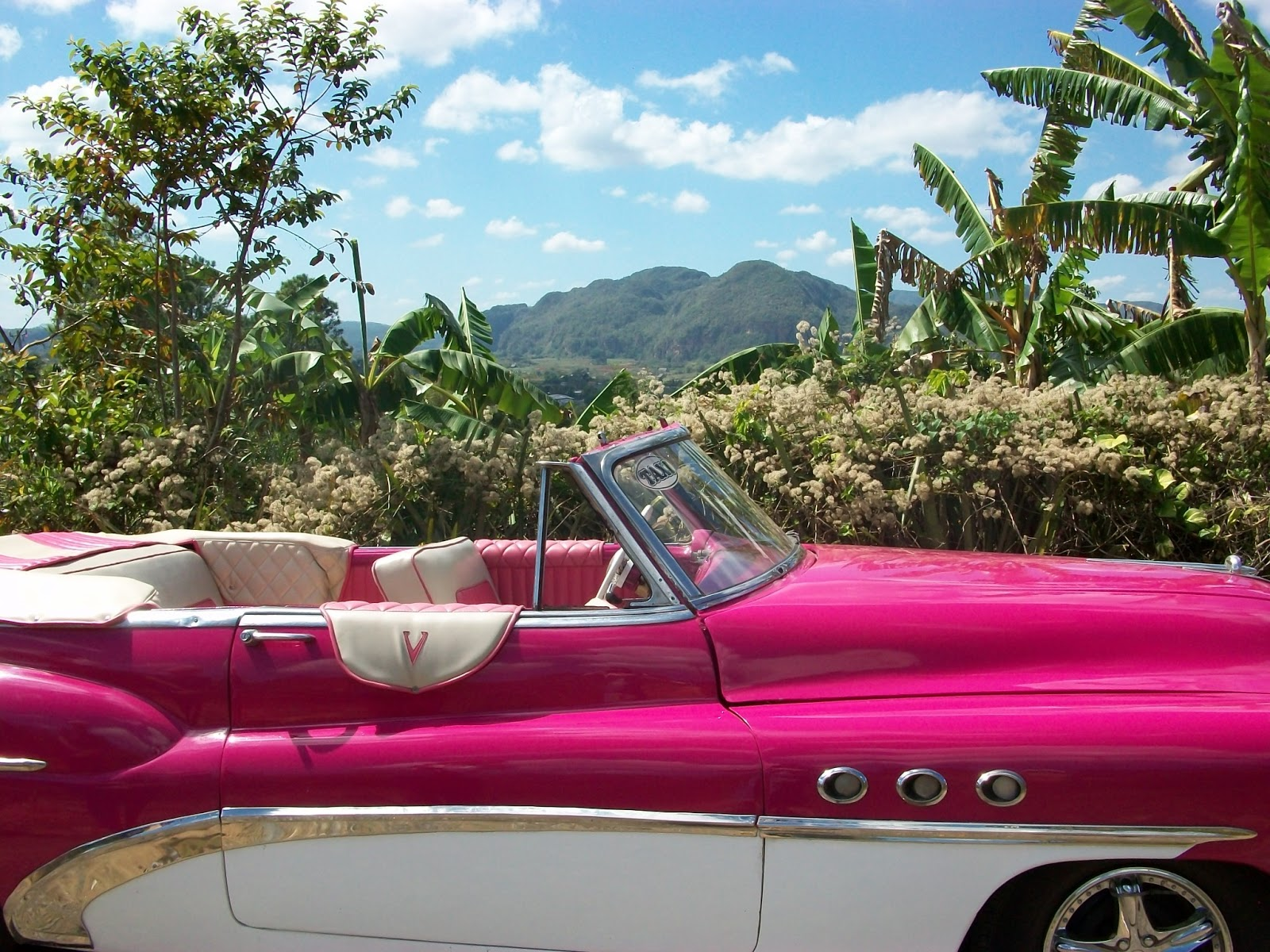 What Kind Of Cars Do They Drive In Cuba
