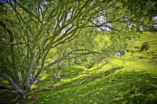 Hobbit Niezwykła podróż film pejzaże krajobrazy 5