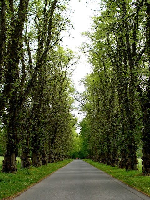 photography by ChatterBlossom of springtime trees lining a Scottish lane