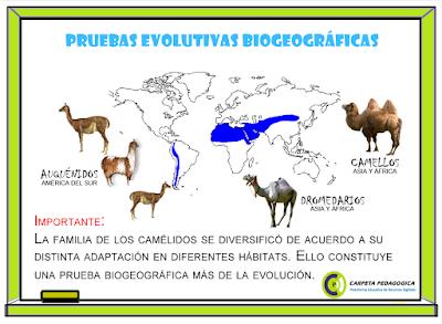 Pruebas Evolutivas Biogeográficas