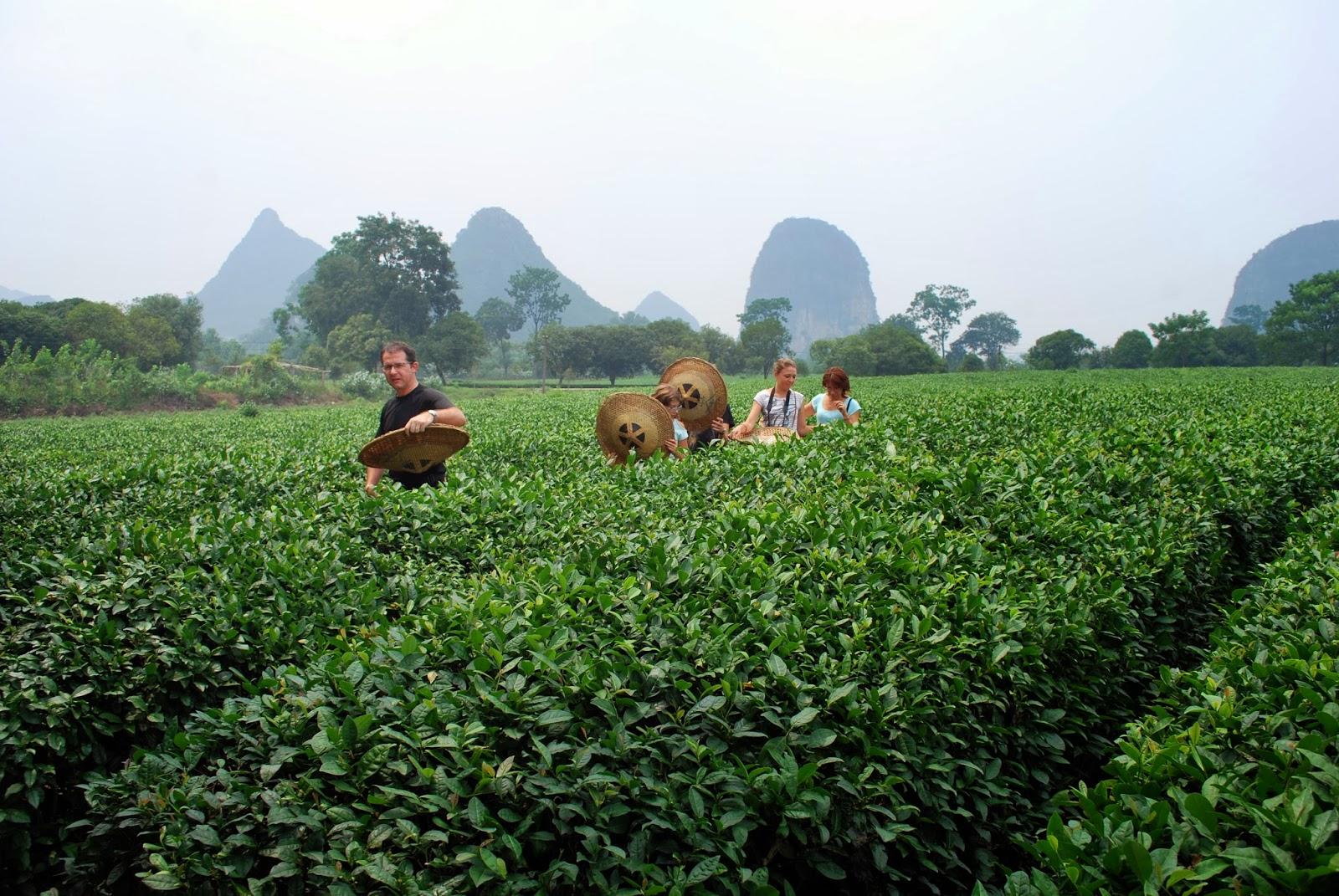 Les Tribulations Des Mornet En Chine  Mardi 20 Ao U00fbt